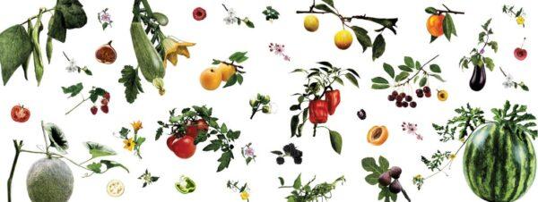 Fruits et légumes de saison - été