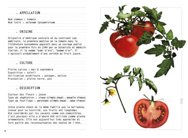 Saison ETE - Tomate