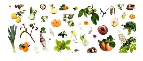 Fruits et légumes d'automne Observations de saison je pousse en automne