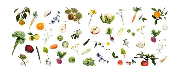 Fruits et légumes d'automne Observations de saison je pousse en hiver
