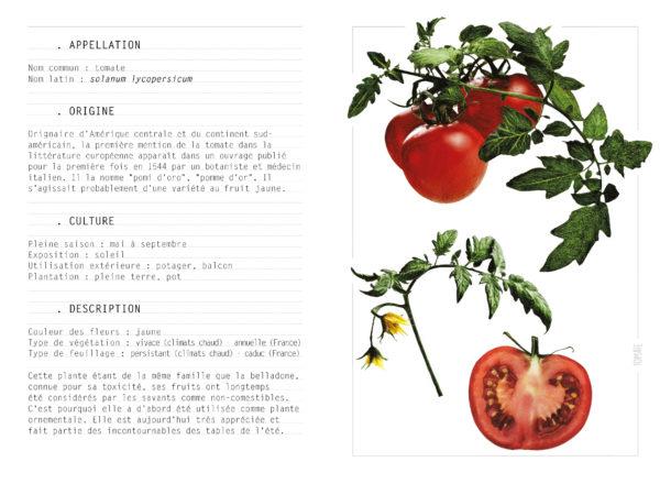 EBOOK - Saison ETE - Tomate